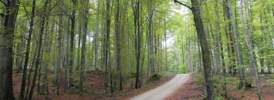 Waldweg Ausschnitt