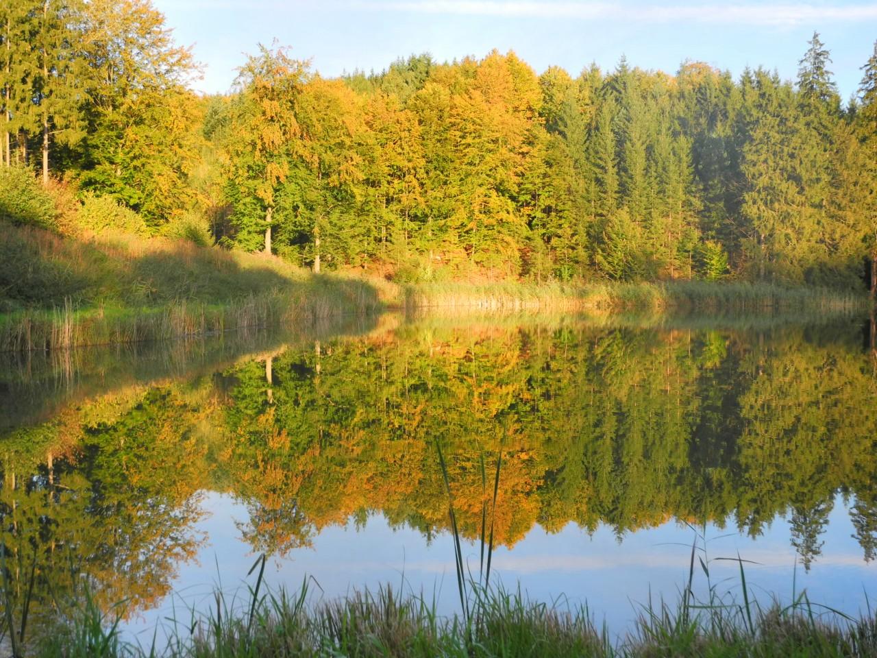 Herbstliche Abendstimmung am Tannetweiher bei Burgwalden